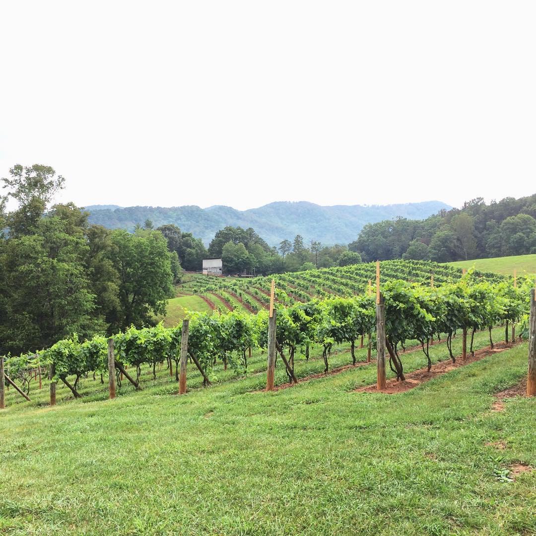 Asheville Things To Do - Addison Farms Vineyard - Original Photo