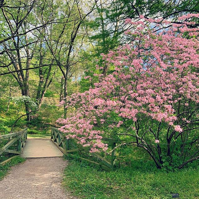Asheville Things To Do - Botanical Gardens at Asheville - Original Photo
