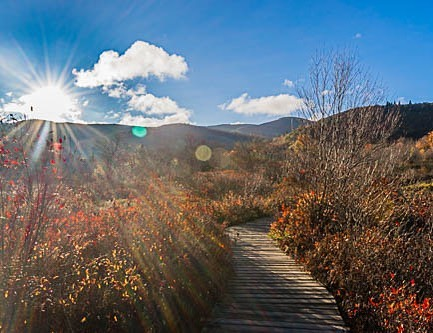 Asheville Hikes - Graveyard Fields Loop - Original Photo