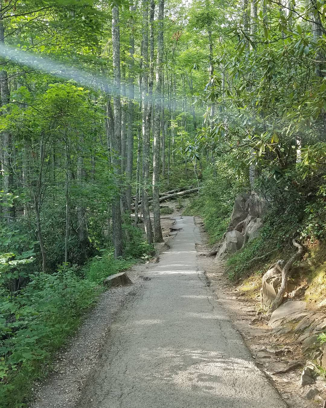 National Park Hikes - Laurel Falls Trail - Original Photo