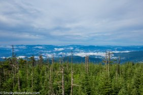 National Park - Clingmans Dome: Highest Point in Tennessee