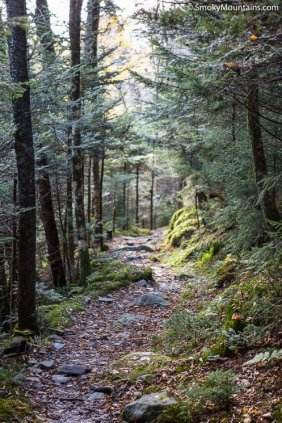 All - Mount LeConte via The Bullhead Trail