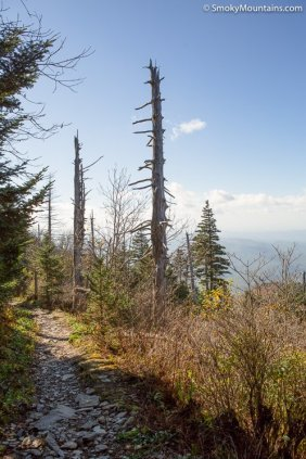 National Park - Mount LeConte via The Bullhead Trail