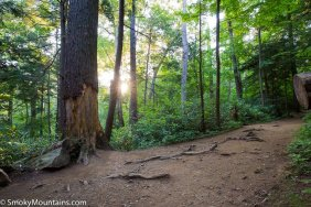 National Park - Trillium Gap Trail to Mount LeConte