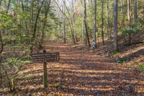 All - Albright Grove Loop Trail