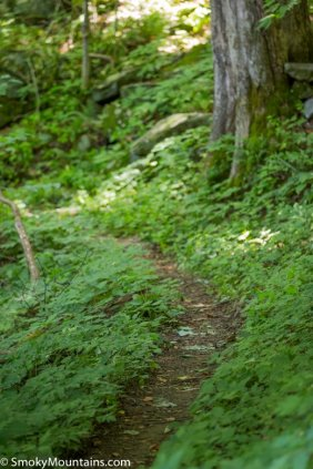 All - Huskey Gap Trail