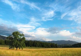 National Park - Cades Cove Horseback Riding & Stables