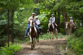 Pigeon Forge - Five Oaks Riding Stables