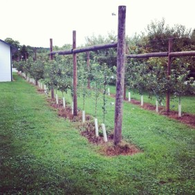 Sevierville - Apple Barn Winery