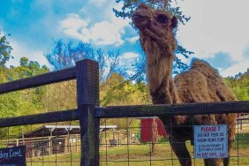 All - Smoky Mountain Deer Farm & Exotic Petting Zoo