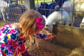 Sevierville - Smoky Mountain Deer Farm & Exotic Petting Zoo