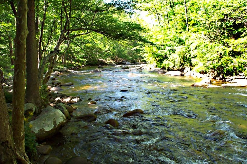Photo of a Gatlinburg Cabin named Rivers Edge - This is the third photo in the set.
