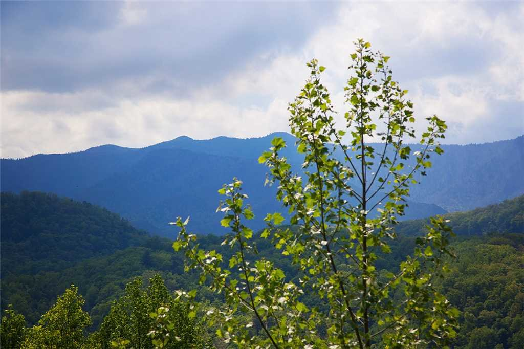 Photo of a Gatlinburg Cabin named Papa Bear - This is the thirty-ninth photo in the set.