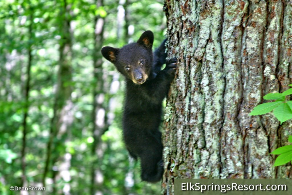 Photo of a Gatlinburg Cabin named Grin & Bear It - This is the seventeenth photo in the set.