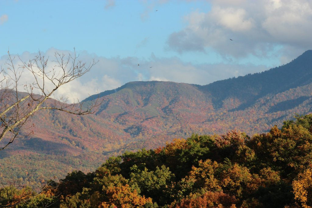 Photo of a Gatlinburg Cabin named Bearway To Heaven #1318 - This is the fourth photo in the set.