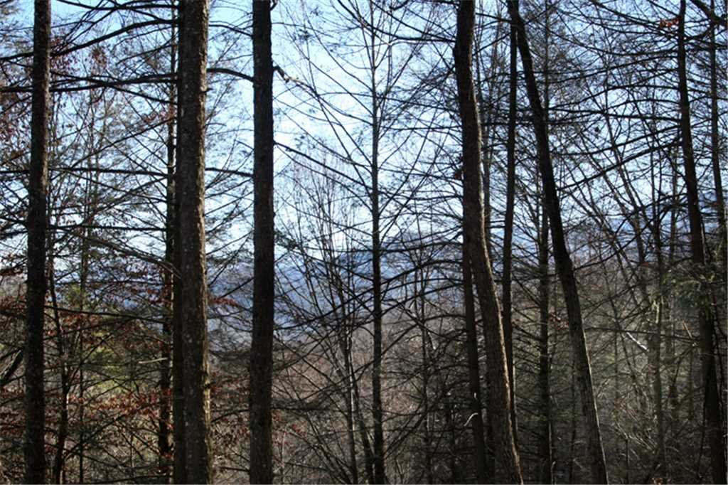 Photo of a Gatlinburg Cabin named Great Expectations - This is the fourteenth photo in the set.