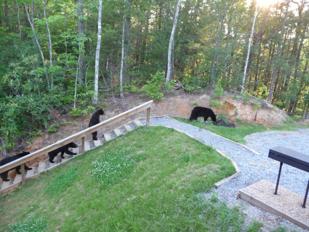 Photo of a Gatlinburg Cabin named Bear's Eye View - This is the thirty-seventh photo in the set.