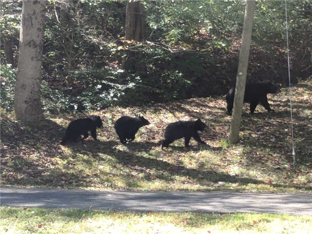 Photo of a Gatlinburg Cabin named Bear Crossing - This is the thirty-third photo in the set.