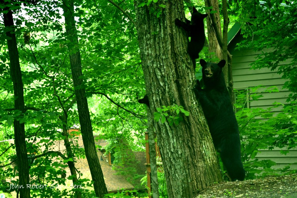 Photo of a Gatlinburg Cabin named Wild Thing #1525 - This is the seventeenth photo in the set.