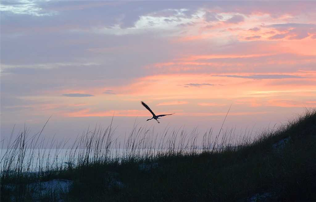 Photo of a Panama City Beach Condo named Summit 828 - This is the thirtieth photo in the set.